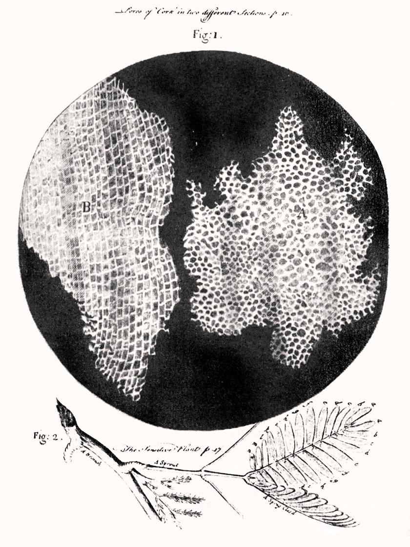 RobertHookeMicrographia1665