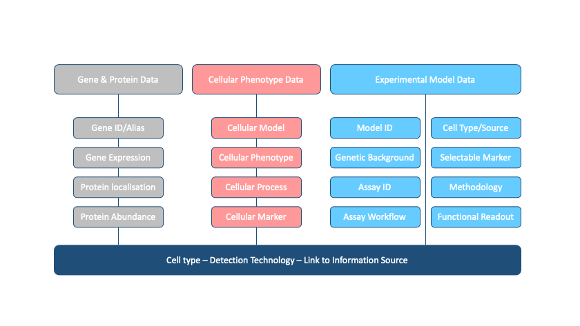 Diagram of the information capture workflow