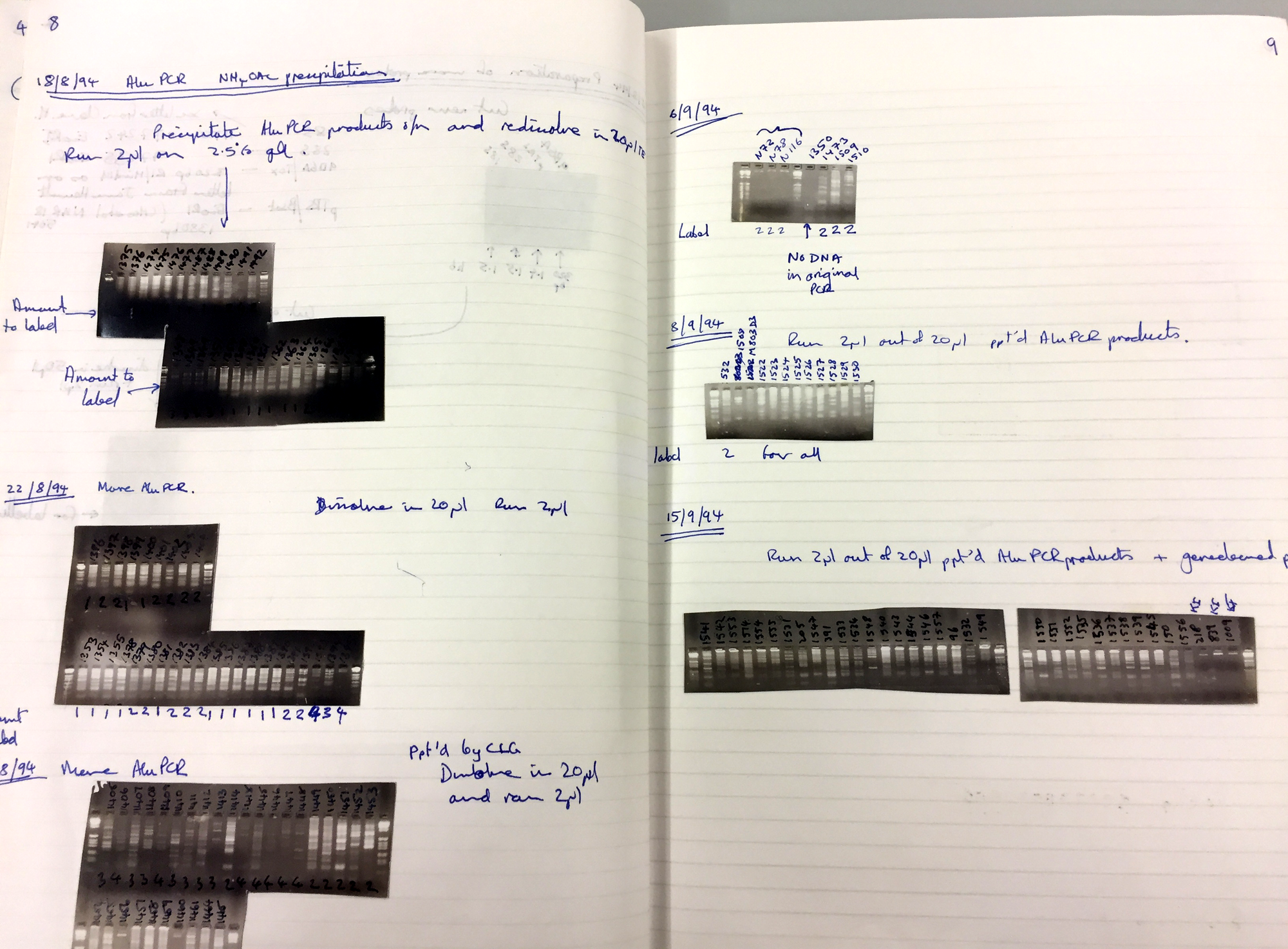 Double page in a laboratory notebook, from several days in August 1994. It has images of PCR gels and accompanying notes.